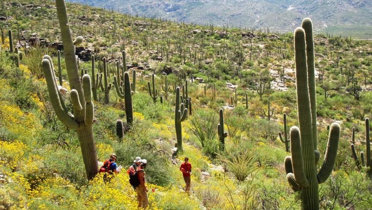 Citizens play an important role in science done at Saguaro National Park in Tucson