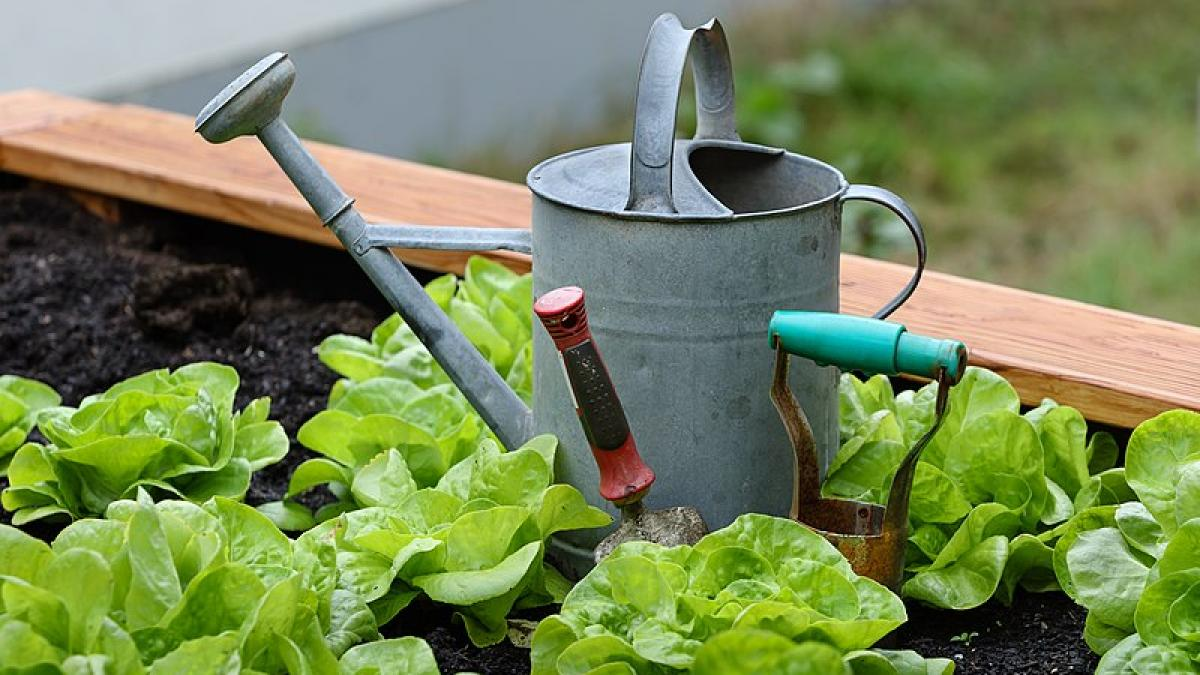 A watering can and garden tools sit in a garden plot.