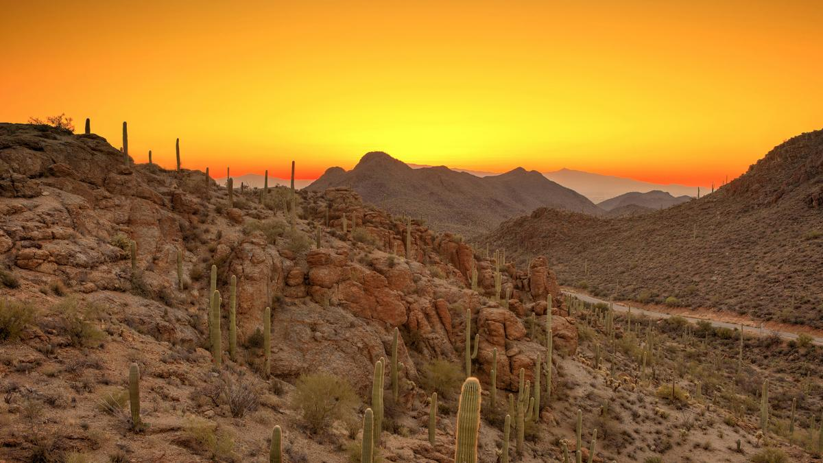 Desert sunset image for SLSA 2017
